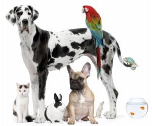 Pets in rental property
