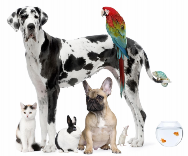Pets vs No Pets at your rental property