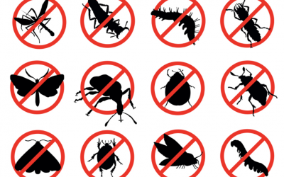 Pest control in your rental property